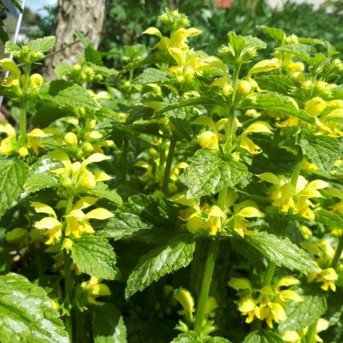 Bienen und Landwirtschaft: Synergien erforschen, Lösungen entwickeln