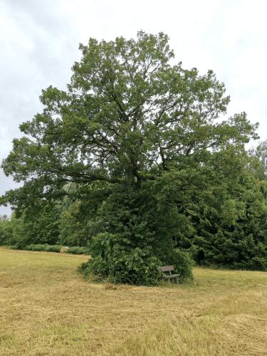 Gelungene Baumpflanzaktion in Morscholz